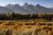 blacktail-autumn