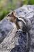 cheekful-squirrel