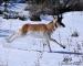 running-antelope