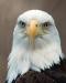 eagle-gaze