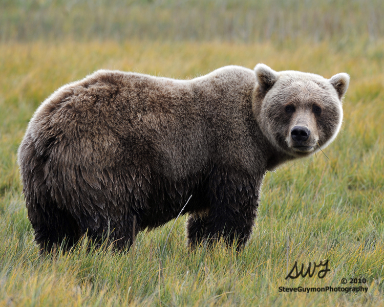grazing-bear