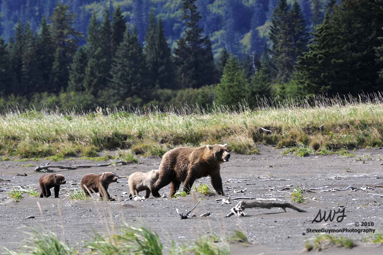 grizzly-family