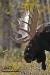 moose-rack