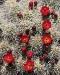 cactus-web